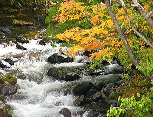 宿の下を流れる木ノ根沢の紅葉