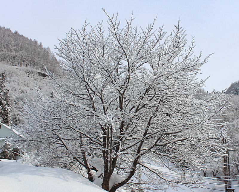 雪景色最高