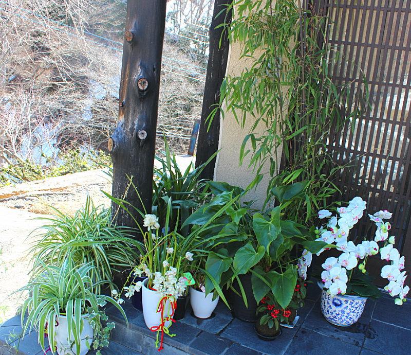 清流の宿たむらの植物