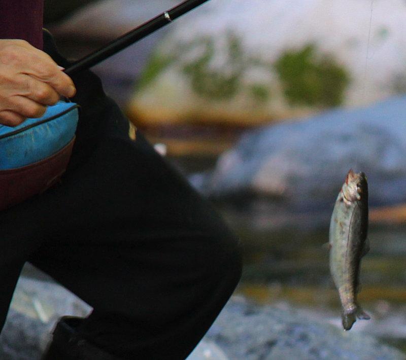 木ノ根沢で渓流釣り