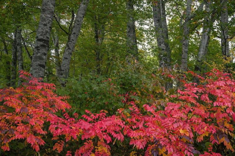 坤六峠、奥利根水源の森紅葉情報