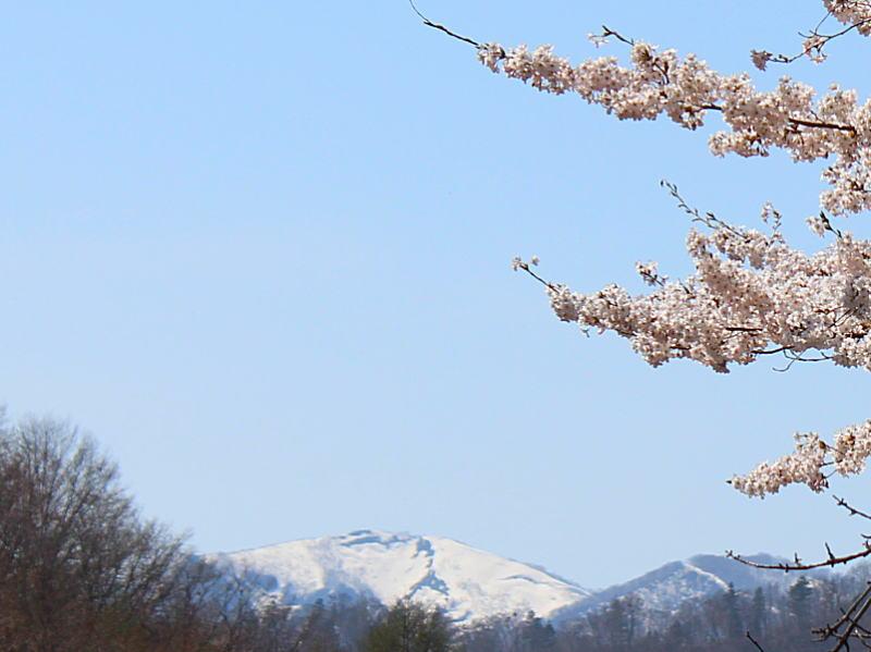 山桜満開&源泉掛け流し貸切露天風呂
