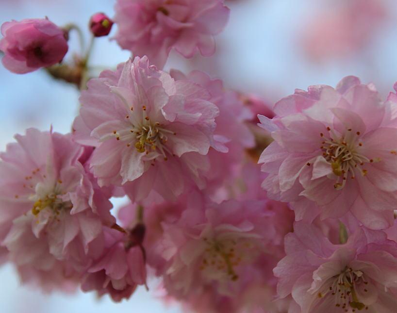 桜満開&源泉掛け流し貸切露天風呂