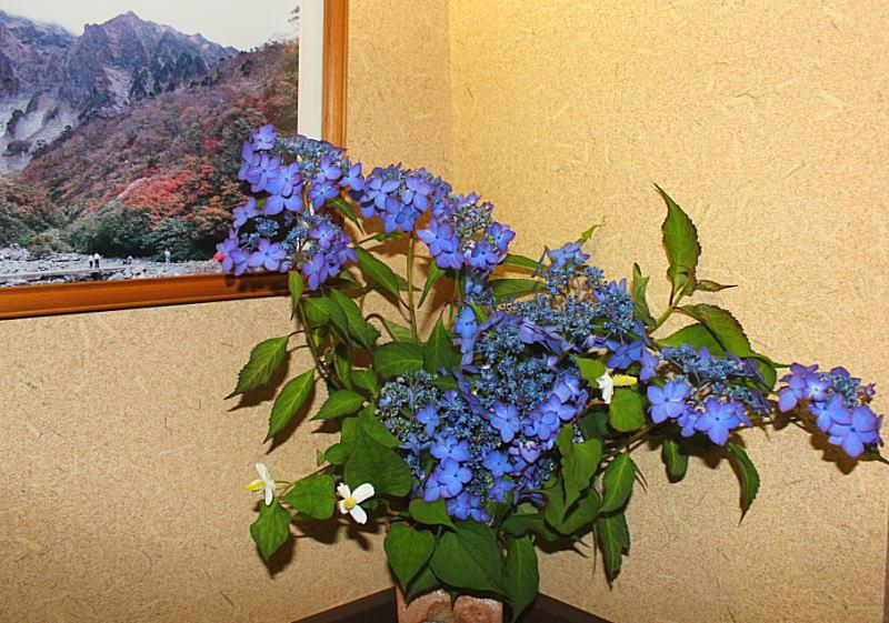 額紫陽花とドクダミ&源泉掛け流し貸切露天風呂
